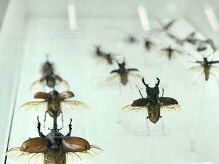 昆虫が飛んで着地するまでを展示した標本の写真・画像素材[2249689]