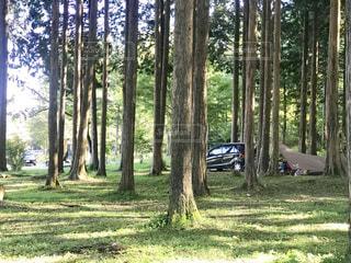 森の中のキャンプの写真・画像素材[2459566]