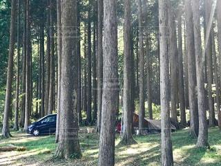 森の中のキャンプの写真・画像素材[2459568]