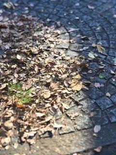 石畳と落ち葉の写真・画像素材[2713653]