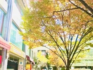 街中の樹々も秋の色合いになってきました。の写真・画像素材[2726398]