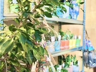 植物の鉢植えの写真・画像素材[2739544]