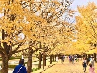 昭和記念公園の銀杏並木。焦点加工をして人物が判定できないようにボカしています。の写真・画像素材[2752657]