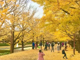 昭和記念公園の銀杏並木の風景の写真を絵画にアレンジした画像の写真・画像素材[2774551]