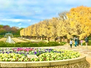 昭和記念公園のカナールの銀杏並木。モデルリリースにかからないように焦点加工で調整しました。の写真・画像素材[2779391]