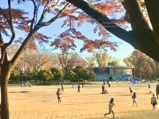 小金井公園の広場。秋の日差しで黄色く染まります。焦点加工をして、人物が判定できないようにしています。の写真・画像素材[2791561]