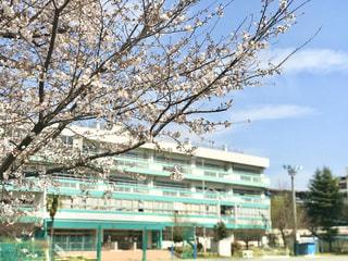 桜と校舎の写真・画像素材[3040806]