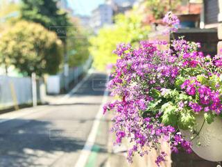 朝の出勤時に見かけた、プランターの綺麗な花の写真・画像素材[3087049]