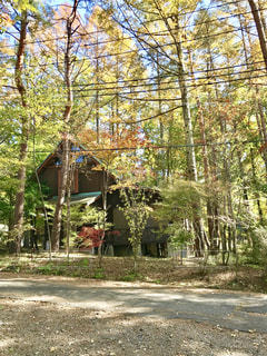 森の中の別荘の写真・画像素材[3226495]