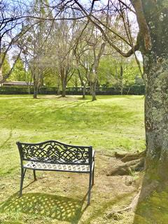 芝生とベンチの写真・画像素材[3226493]