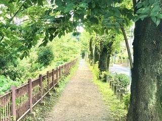 玉川上水の遊歩道を散歩の写真・画像素材[3512408]