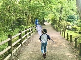 夏休みといえば虫捕り。網をもってズンズン雑木林を進んでいく子。この後、見事カブトムシをゲットしました。の写真・画像素材[3559153]