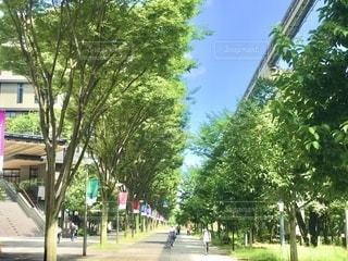 立川モノレール下の並木道で気持ちの良い風が吹いていましたの写真・画像素材[3640201]
