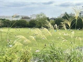 昭和記念公園の見晴台からの眺め。ススキが秋の訪れを感じます。の写真・画像素材[3749884]
