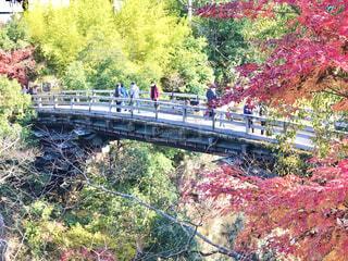 山梨県大月市の観光地、紅葉の猿橋です。の写真・画像素材[3897547]