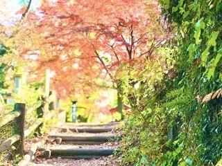 階段の向こうに紅葉の写真・画像素材[3897679]