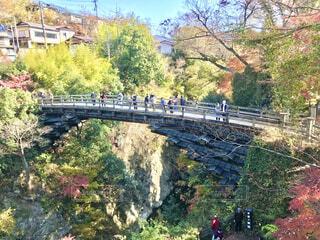 山梨県大月市の観光地、紅葉の猿橋です。の写真・画像素材[3899422]