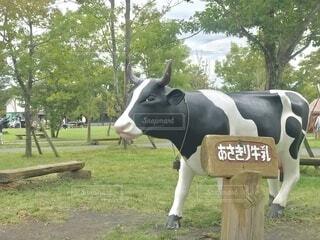 来年は丑年ということで、朝霧高原で見つけた牛のモニュメント。の写真・画像素材[4007674]