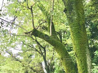 緑の樹々の写真・画像素材[4181534]