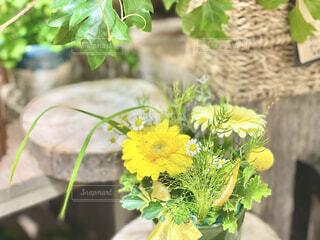 黄色い花の写真・画像素材[4307624]