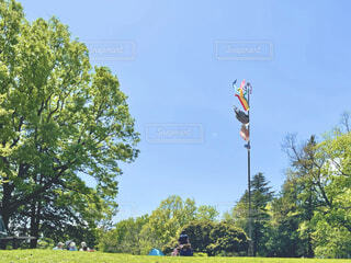 新緑の府中の森公園を散歩の写真・画像素材[4345187]