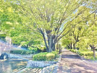 新緑の府中の森公園を散歩の写真・画像素材[4345192]