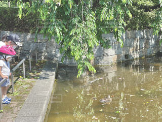 公園の池で泳ぐ鴨の親子の写真・画像素材[4442579]