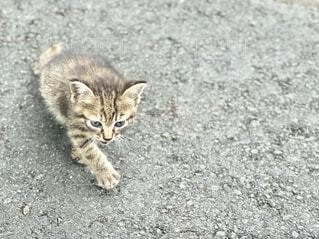 買い物途中で出会った子猫の写真・画像素材[4700546]