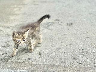 買い物途中で出会った子猫の写真・画像素材[4756700]