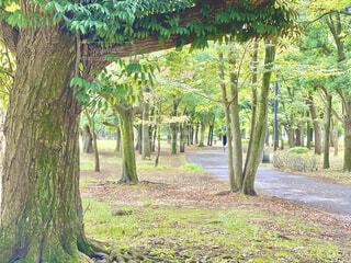 公園の木々の中を散歩の写真・画像素材[4918240]