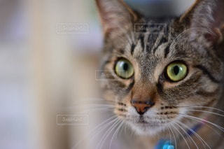 猫の写真・画像素材[119006]
