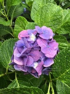 花の写真・画像素材[118970]
