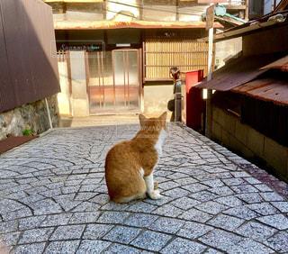 猫の写真・画像素材[257295]