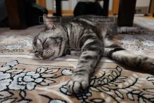 寝てる猫の写真・画像素材[3062832]