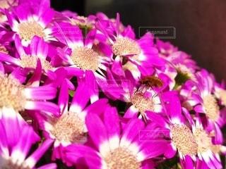 花のクローズアップの写真・画像素材[3086435]