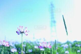 花のクローズアップの写真・画像素材[3074760]