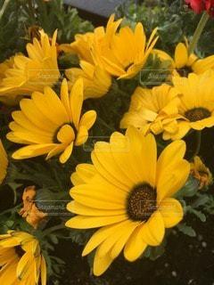 花の写真・画像素材[119108]