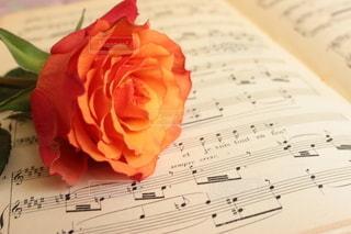 花のクローズアップの写真・画像素材[3212654]