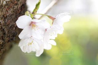 花のクローズアップの写真・画像素材[3069046]