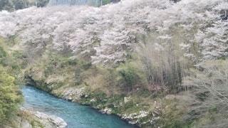 水域を流れる川の写真・画像素材[3083258]