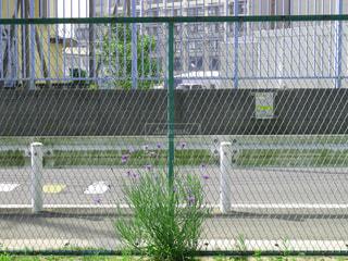 フェンスと花の写真・画像素材[3199616]