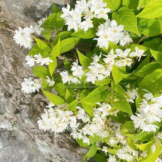 崖に咲く花の写真・画像素材[4390060]