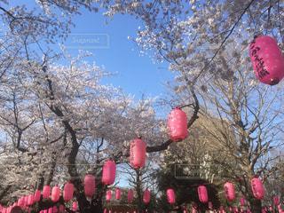 春の写真・画像素材[122214]