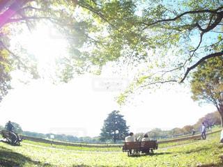 フィールドの大木の写真・画像素材[874239]