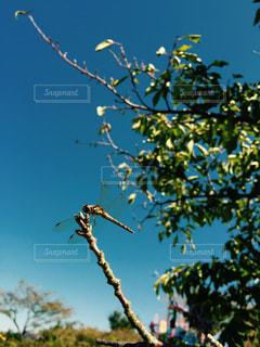 秋の訪れの写真・画像素材[3079400]