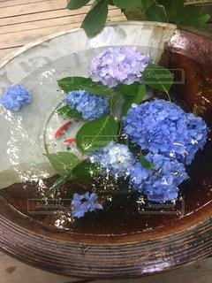 金魚と紫陽花の写真・画像素材[3080274]