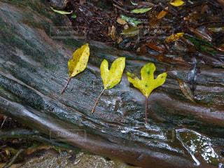 葉っぱで1.2.3!の写真・画像素材[3081760]