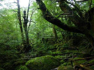 苔むす森の写真・画像素材[3081759]