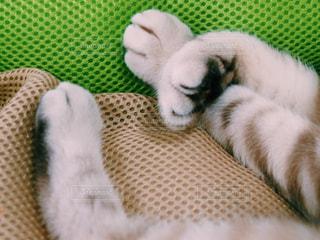 猫 - No.147946