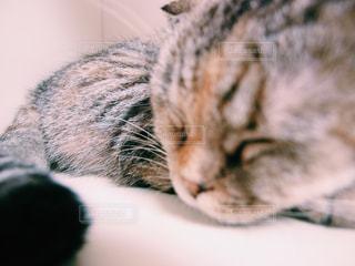 猫の写真・画像素材[147947]